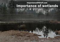 importance of wetlands